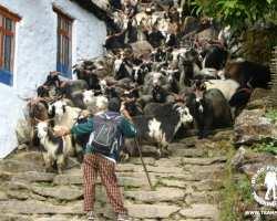 kozy-nepal