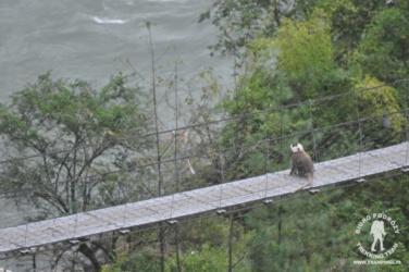 Lamgur na moście