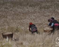 prace-w-polu-nepal