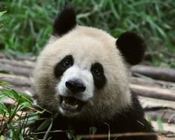 chengdu-rezerwat-dla-pand