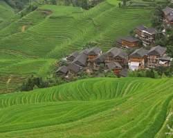 longi-chiny-terasy-pola-ryżowe