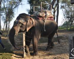 chitwan-slon-przejazdzka-ride