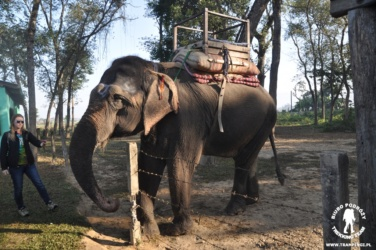 Przejażdżka na słoniach w Chitwan