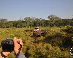 chitwan-safari-slonie