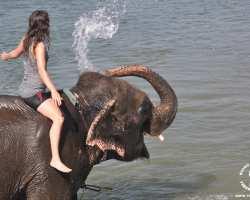 slon-slonik-traba-chitwan-zabawa